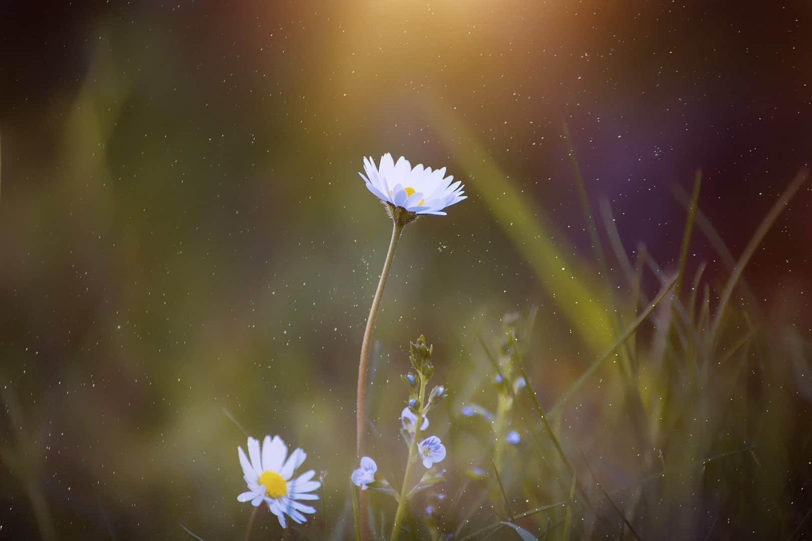 sunflower-gallery