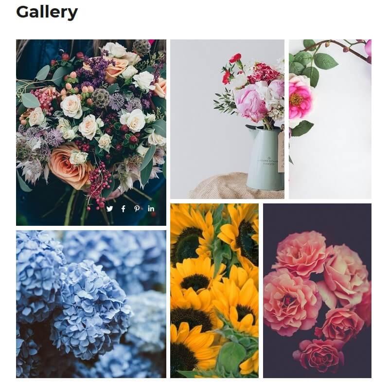 photo-gallery-example
