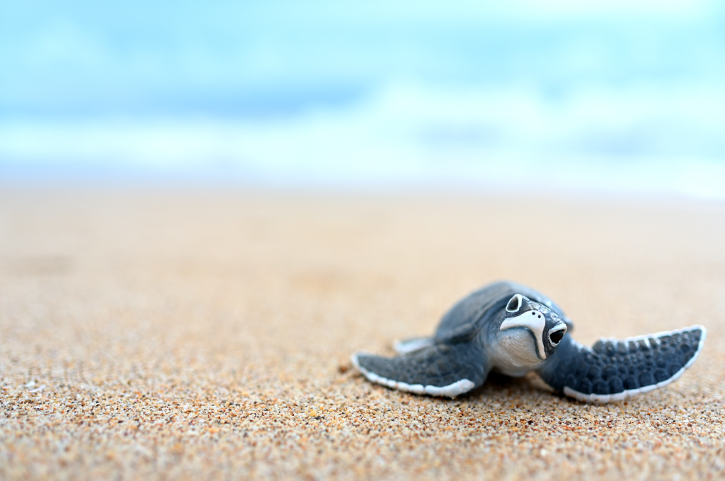 beach photography of a turtle