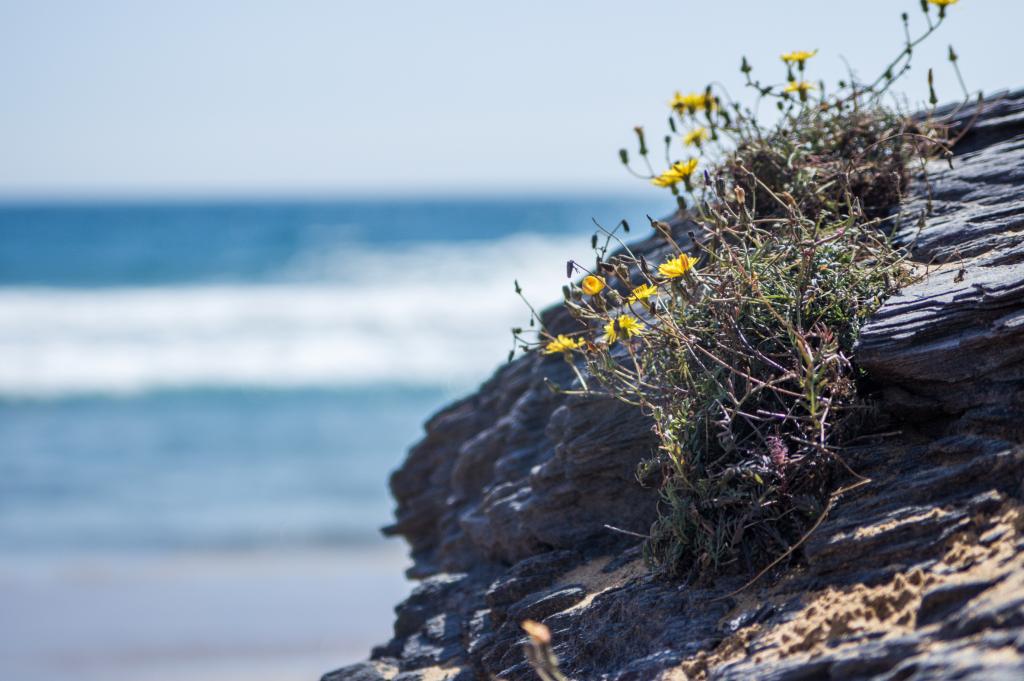 beach vegetation